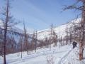 лес в пологой части долины езымянного притока р. Илокалуй.