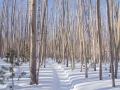 Снегоходка в долине Верх. Ангары