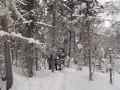 Лес по берегу Пр. Фролихи