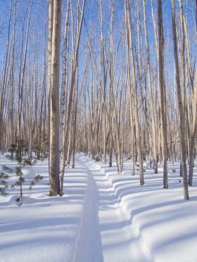 Снегоходка вдоль Верхней Ангары