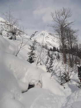 Курумник и стланик, засыпанные снегом