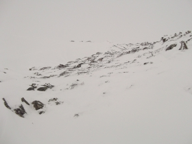 Стланик под снегом